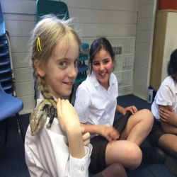Rainforest Comes to St David's Prep!